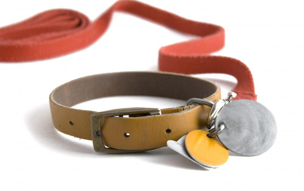When boating with a dog, the pet's collar should include tags with a marina address.