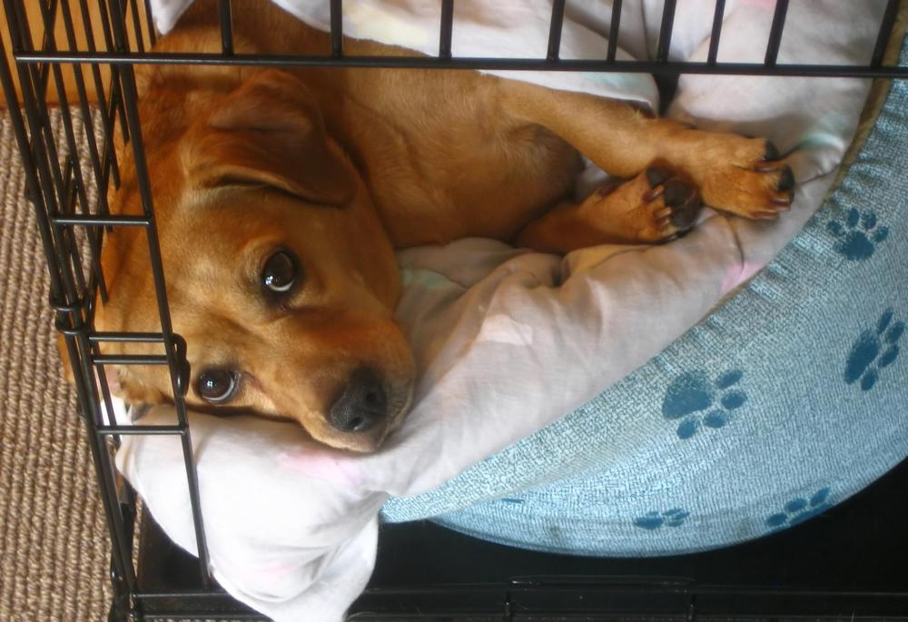 A crate is a safe place to keep a dog when an owner can't watch it.