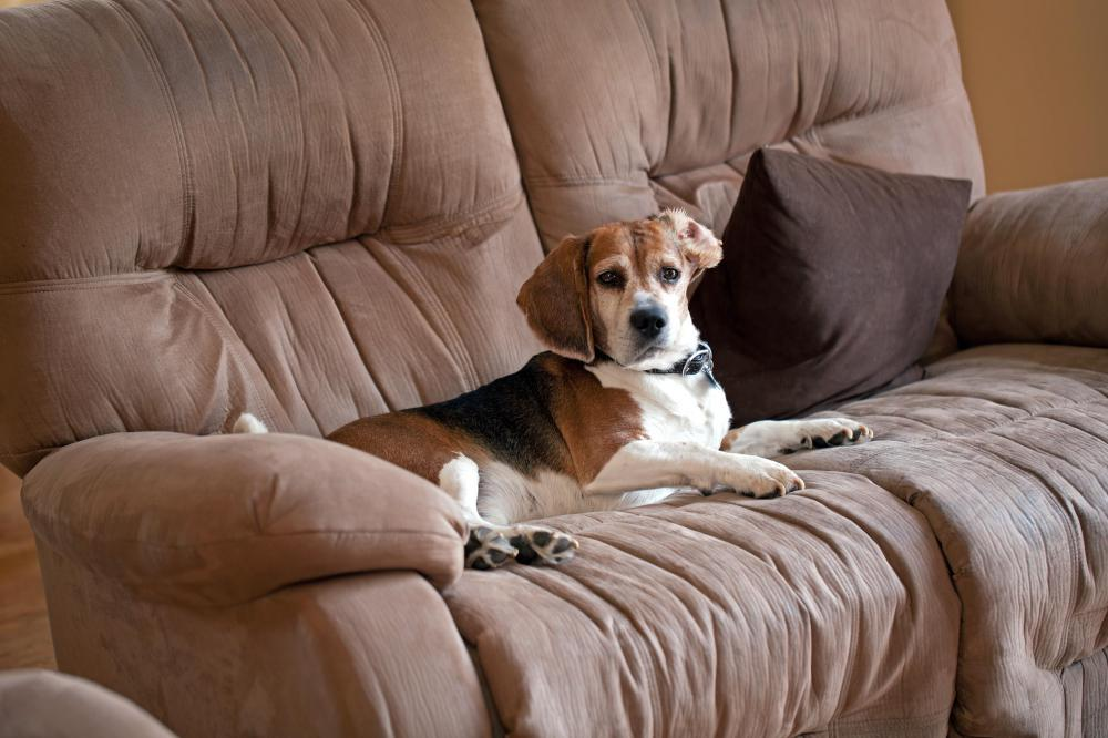 Microfiber Upholstery May Prove A Problem To Pet Owners As Hair And Lint  Easily Stick To The Fabric.