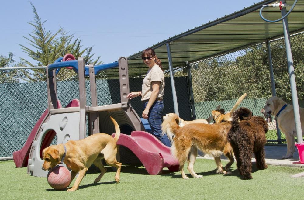 Dog runs at a home facility are part of a dog handler's responsibilities.
