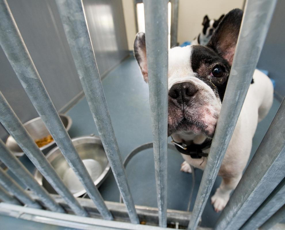 Animal control officers will house lost pets in a shelter until their owner can be found.