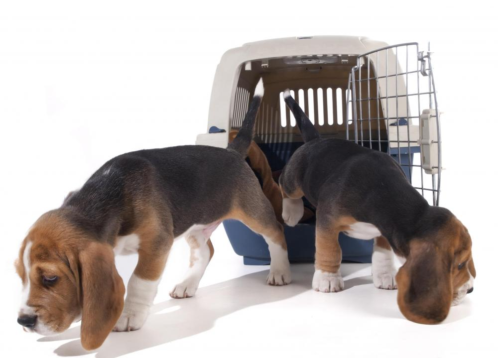 All pillows and toys should be removed from a dog's kennel and washed to deter the formation of flea colonies.