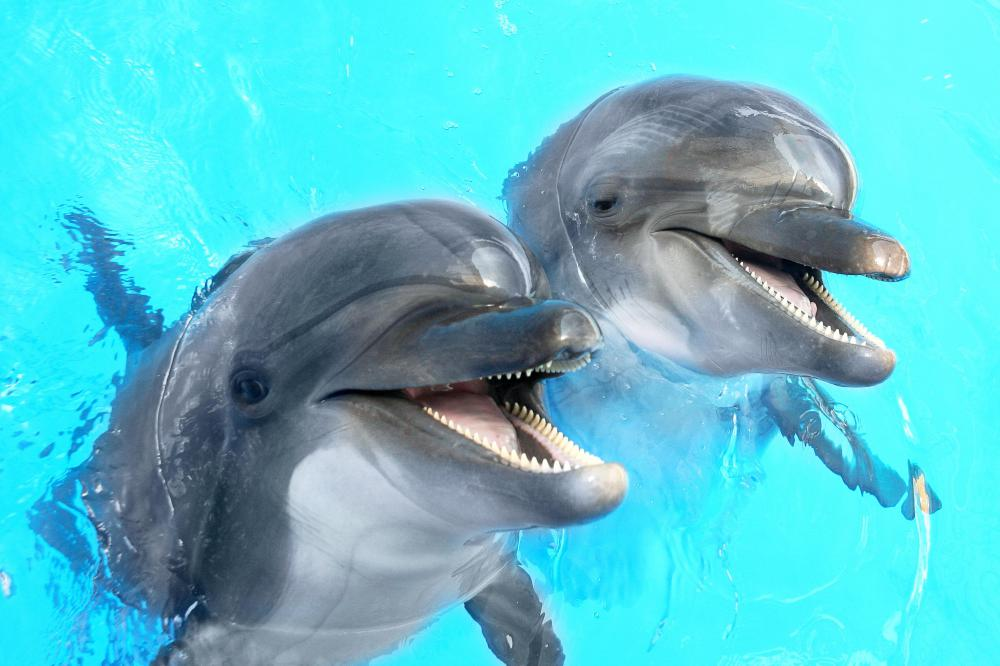 What Is A Dolphin With Pictures