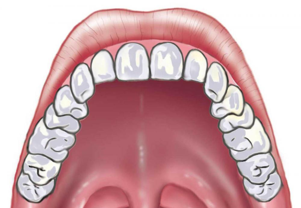The Mouthu0027s Hard Palate Forms The Floor Of The Nasal Cavity.
