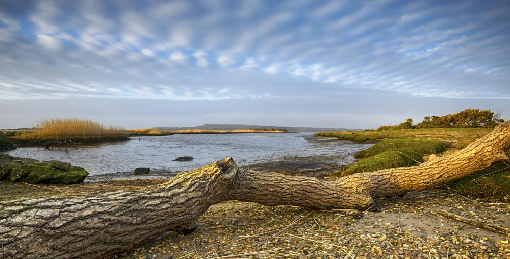 While most closely associated with oceans, drift wood can also be found along river banks and lake shores.