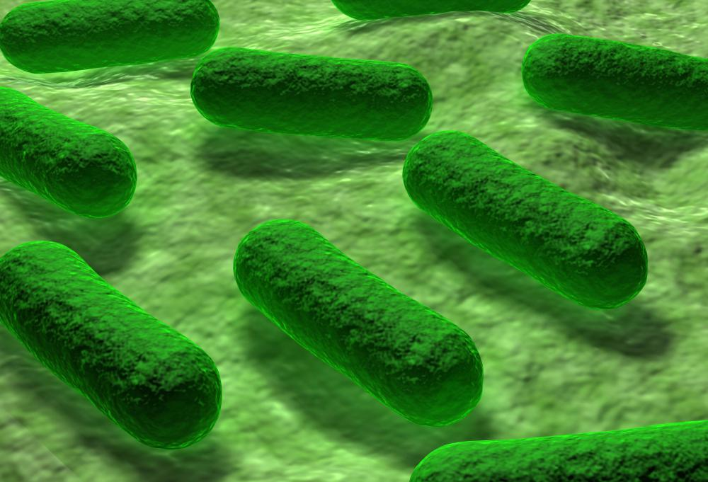 In some areas, E. coli bacteria can be fluoroquinolone resistant.