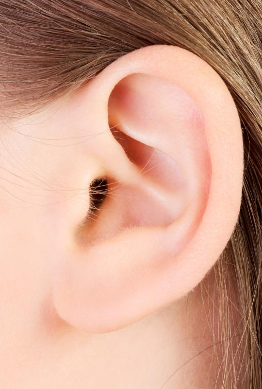 ear-close-up jpg  Ear Cartilage Anatomy