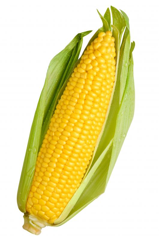 An ear of corn, also called maize.