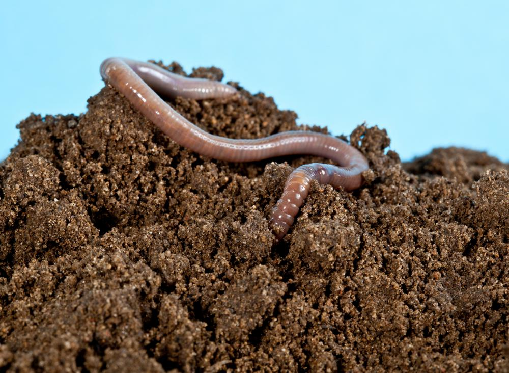Only certain types of earthworms should be in earthworm farms.