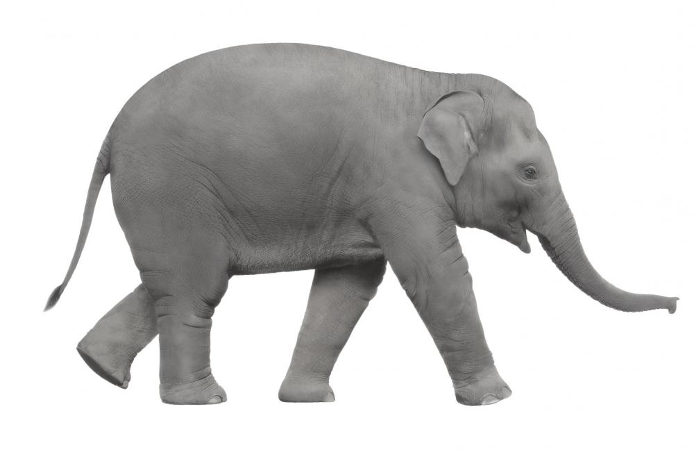 The concept of the white elephant arose in Southeast Asia, where possession of one was considered a blessing but was quite costly.