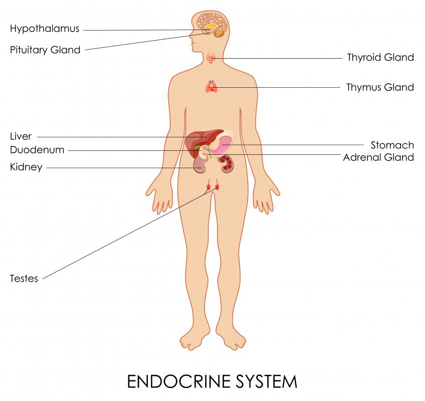 What Is Clinical Endocrinology With Pictures