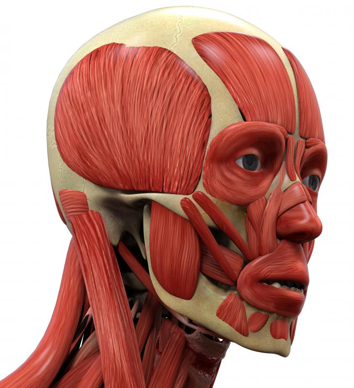 Hypomimia affects the facial muscles.