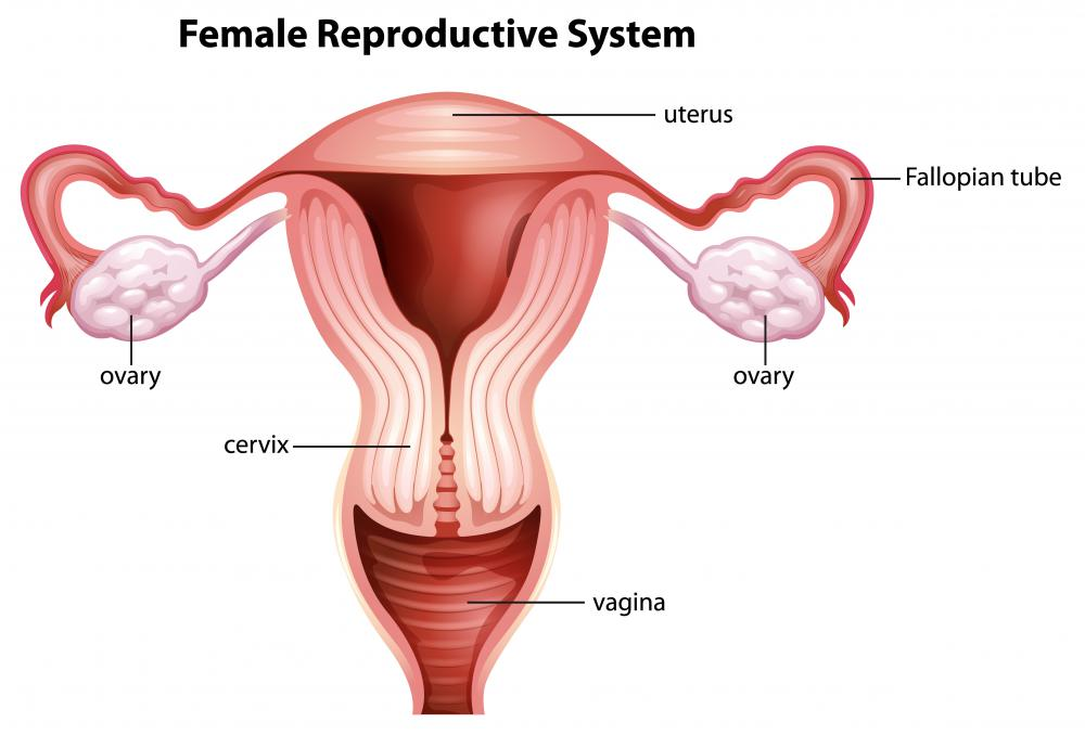 what are bilateral ovarian cysts? (with pictures) fallopian tubes diagram of woman #1