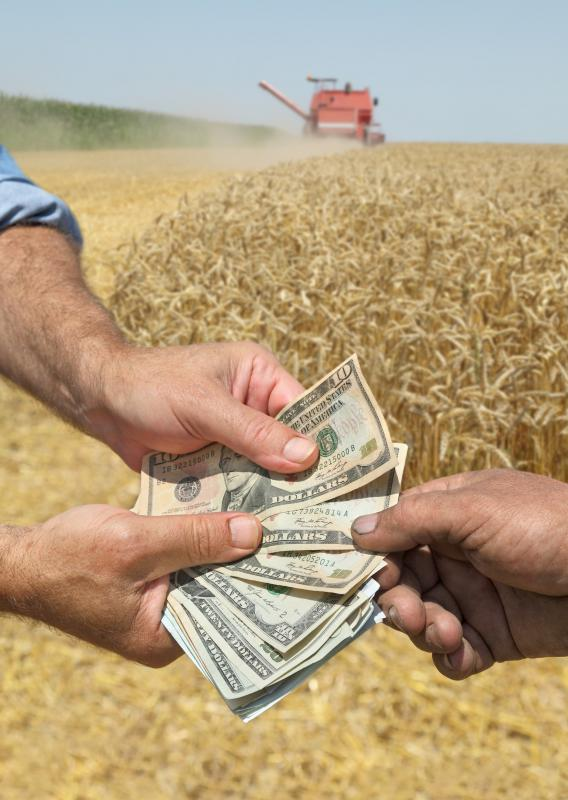 Cash crops are crops grown solely for commercial value.