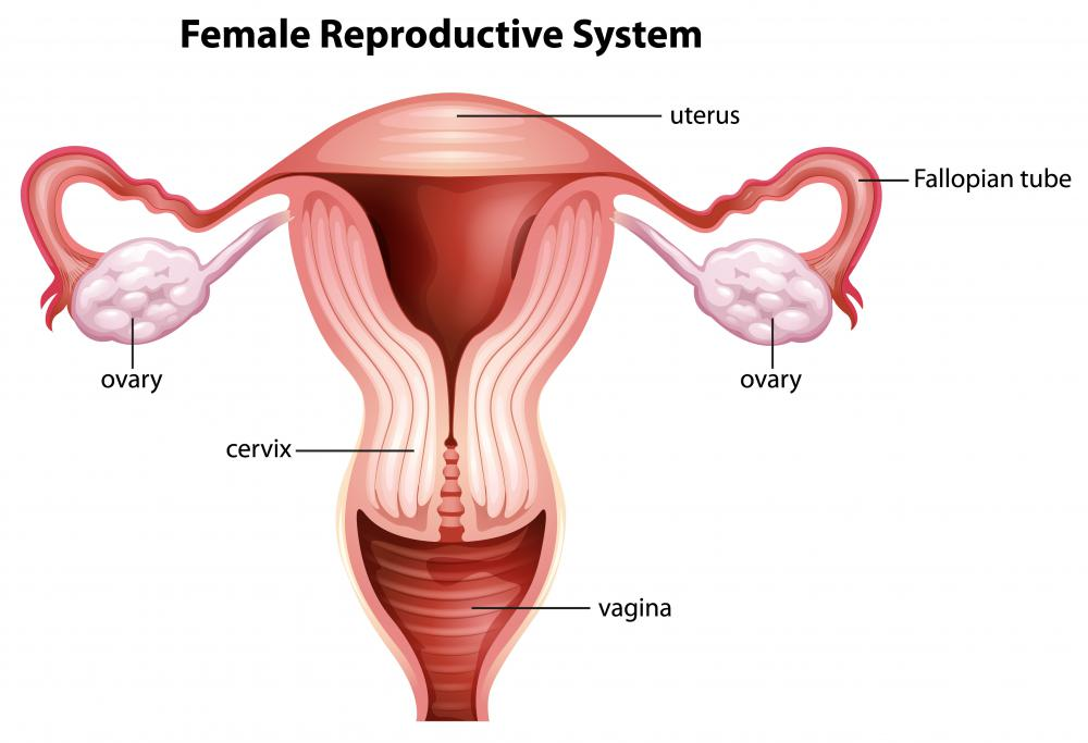Uterine fibroids are tumors that grow in the uterus.