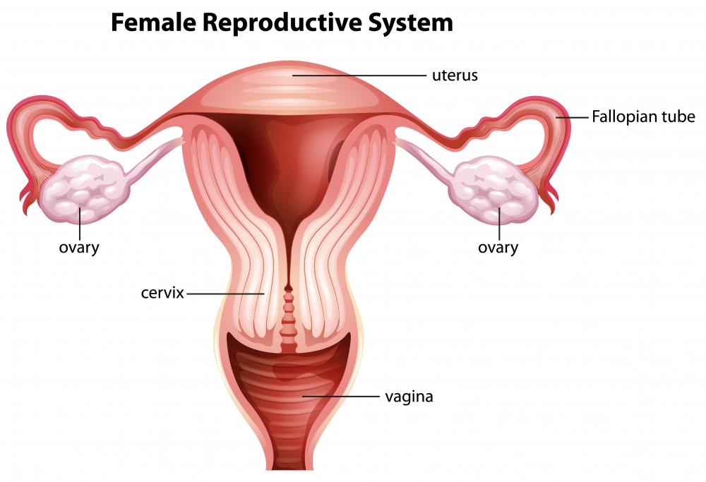 The skene's gland is part of the female reproductive system, adjacent to the entrance to the vagina.