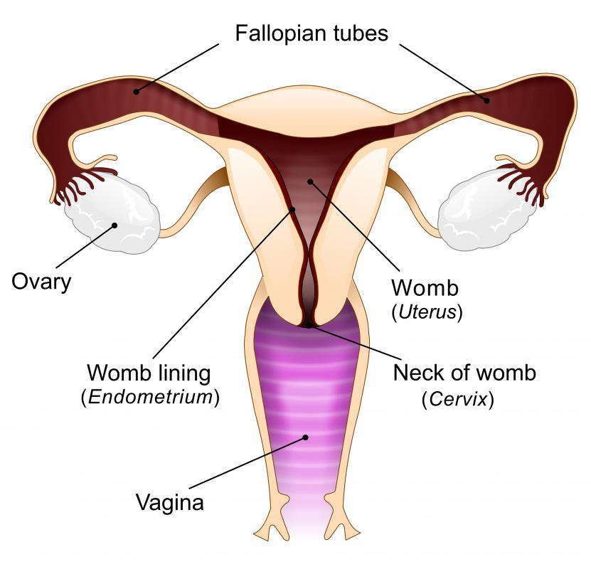 Gynecologists specialize in issues concerning the female reproductive system.