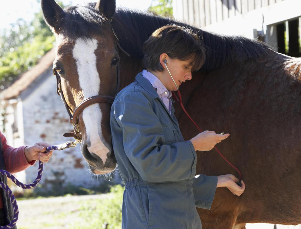 A veterinarian or a specialized horse doctor can help you find the best equine supplements.