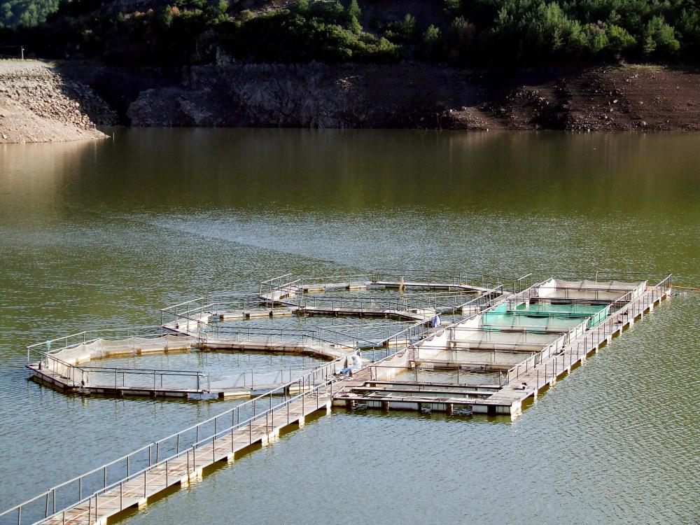 Fish farms may be built in natural lakes.