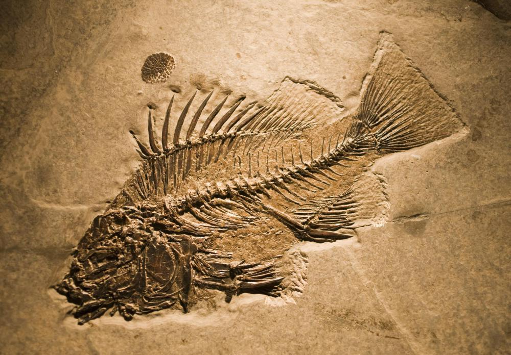 Fossils can reveal how living animal types, such as fish, evolved over time.