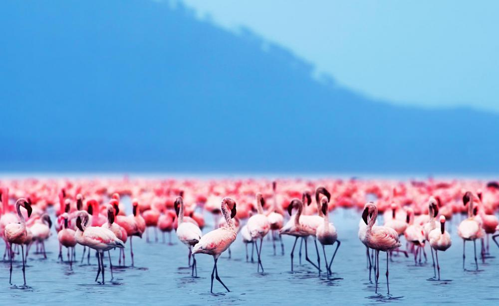 Flamingos live in wetlands.