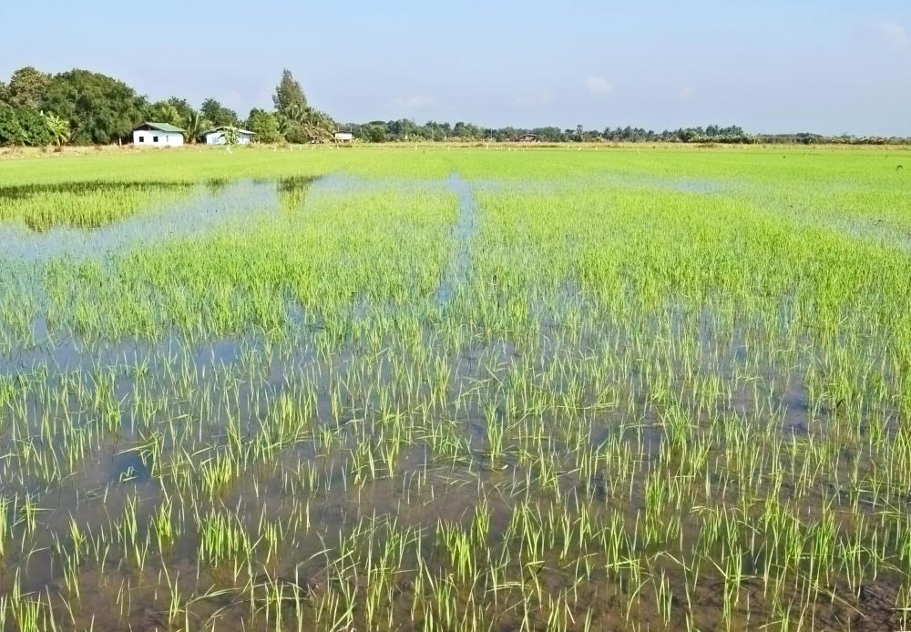Certified crop advisors often deal with irrigation and flooding.