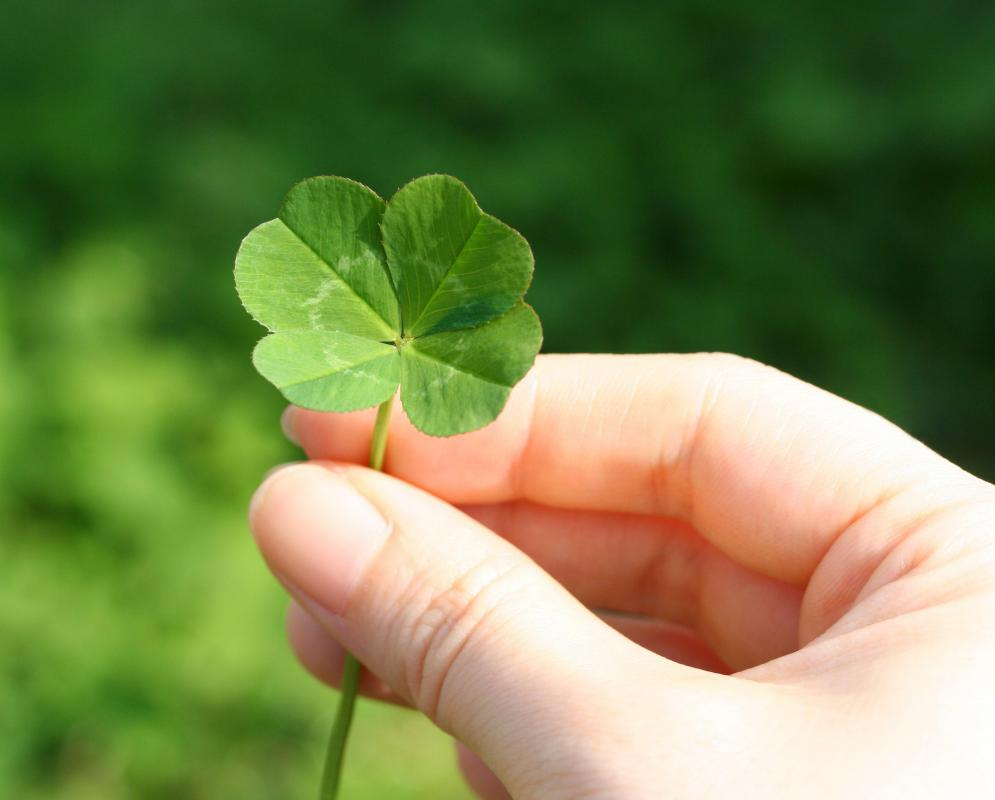 The idea that a four-leaf clover brings good luck is garden lore.