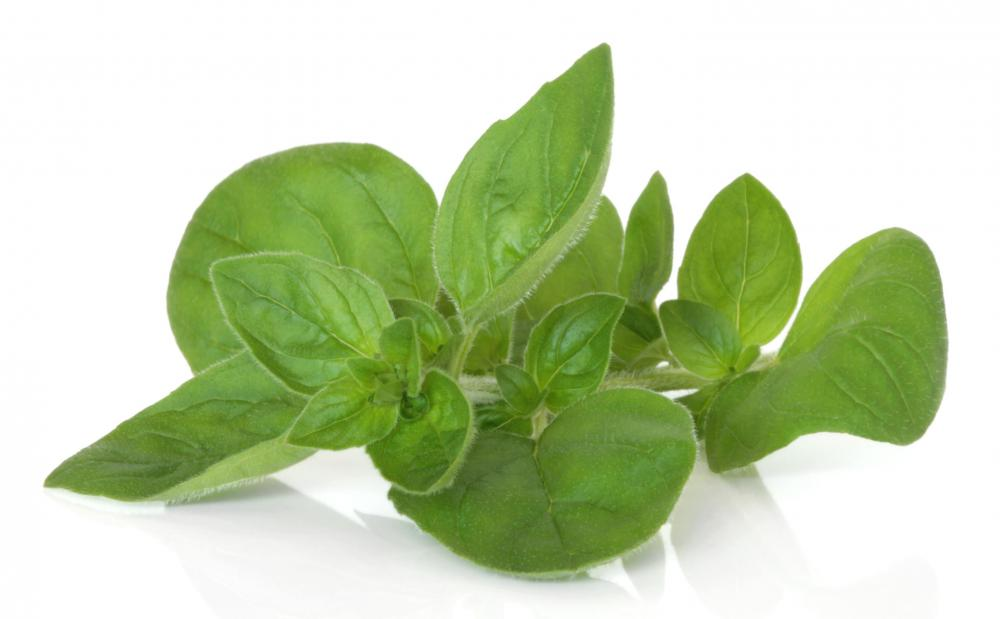Marjoram can be a good addition to edible landscaping.