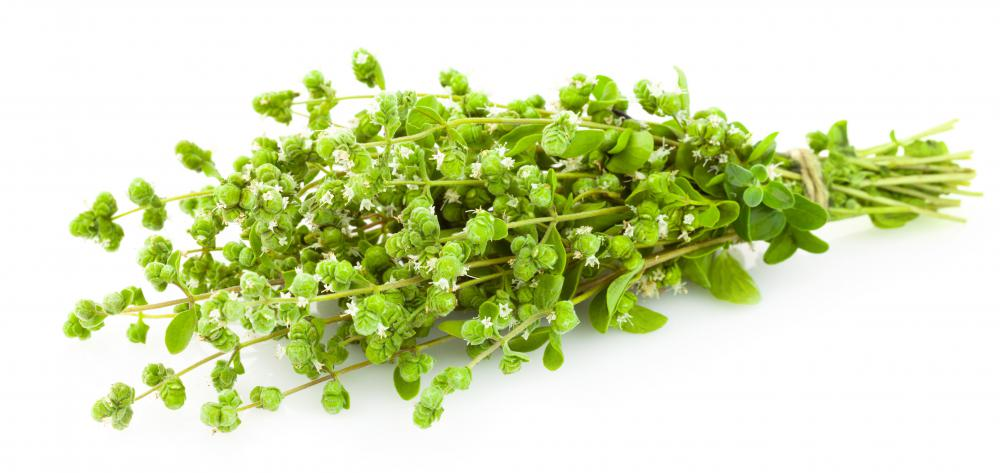Oregano can be used in salad greens to add a bit of flavor.
