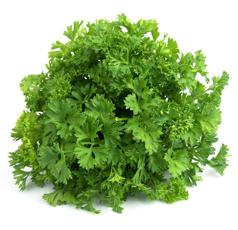 Parsley juice is made from parsley leaves.