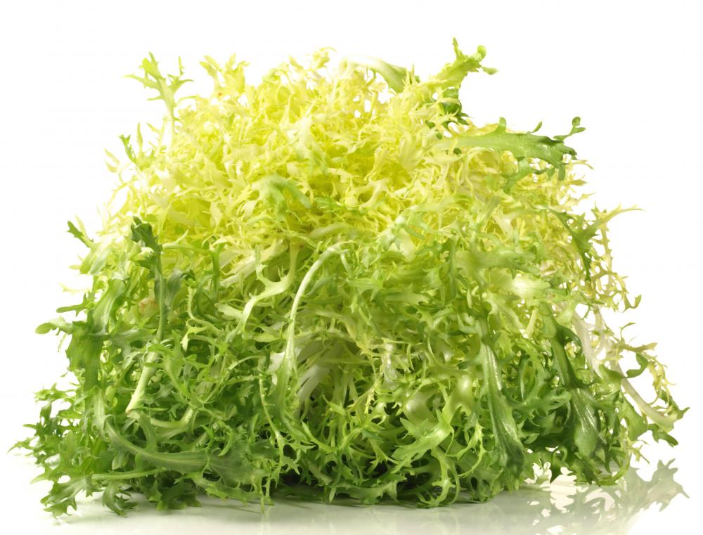 Frisee, which is used in making mesclun.