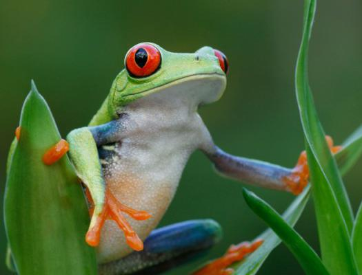 Frogs regulate their body temperature by external means to maintain homeostasis.