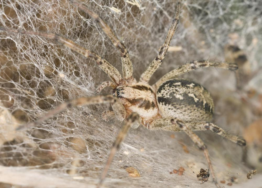 Some spiders prefer habitats that allow for the building of a funnel-shaped web.