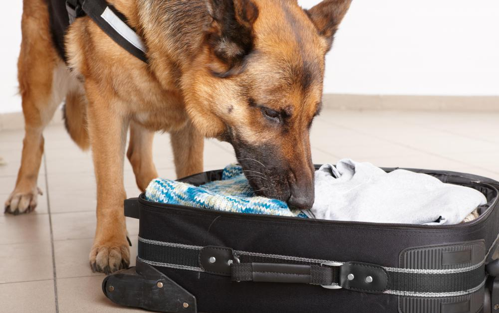 Some TSA officials work with canines in airports to find hazardous or restricted items in passengers' luggage.