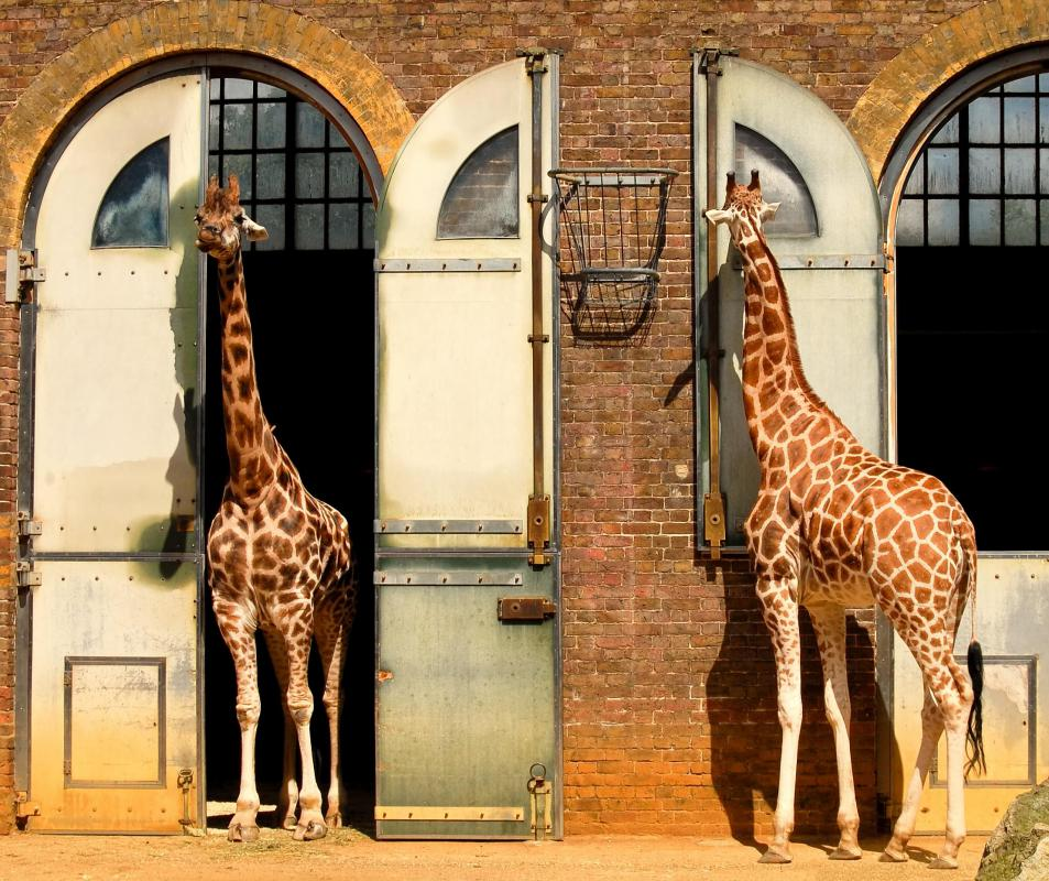 The Blank Park Zoo in Des Moines offers giraffe watching.