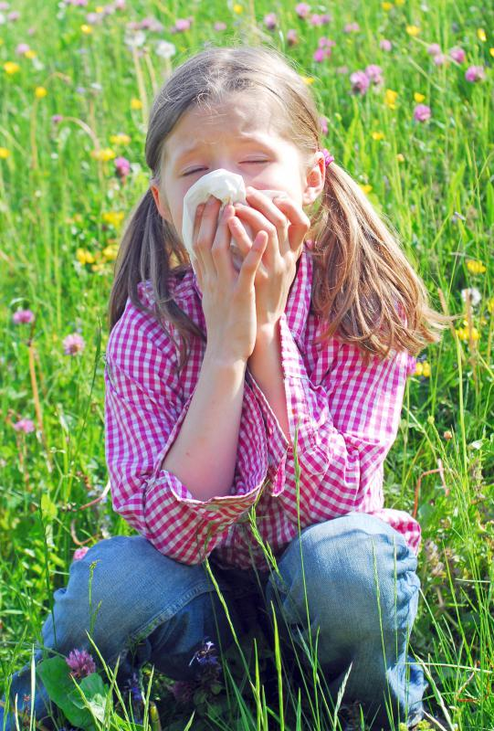 Grass pollen allergies are commonly known as hay fever.