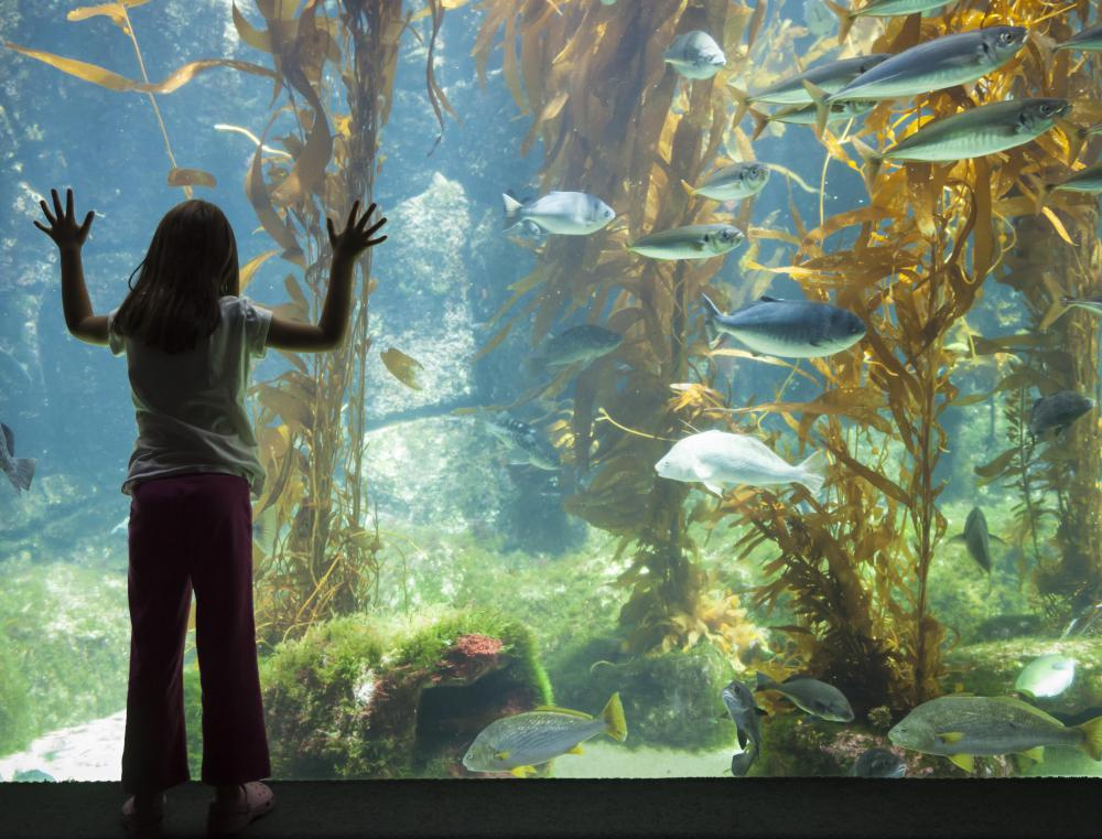 An aquarist provides comprehensive care to fish and aquatic animals, either in an aquarium or in the aquatic section of a zoo.
