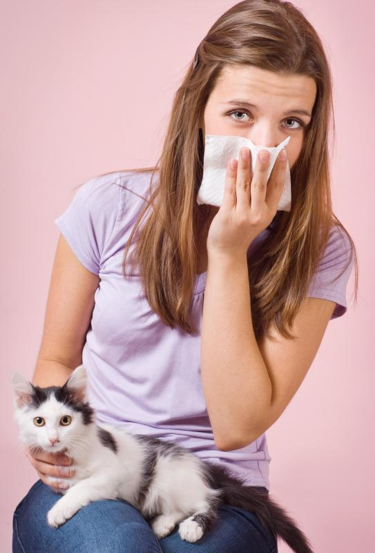 A sore throat and stuffy nose can sometimes be a reaction to pet dander.