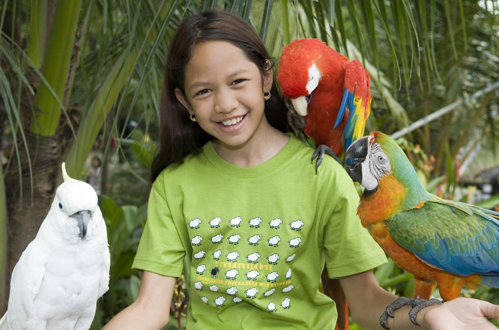 A parrot should be tame before an owner tries to teach it any tricks.