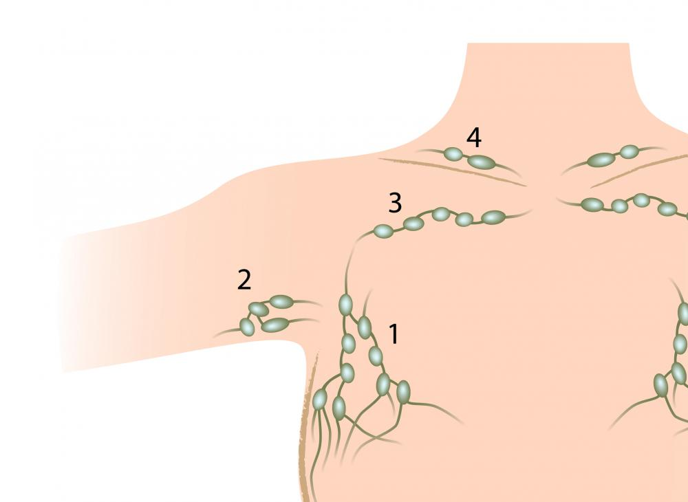 The human arm pit contains axillary lymph nodes.