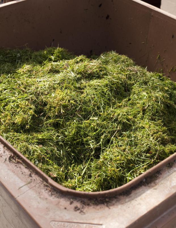 Grass clippings are an organic material used to make mulch.