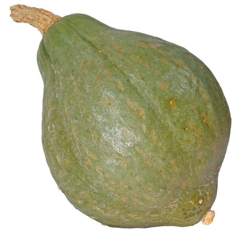 Hubbard squash, a type of winter squash.
