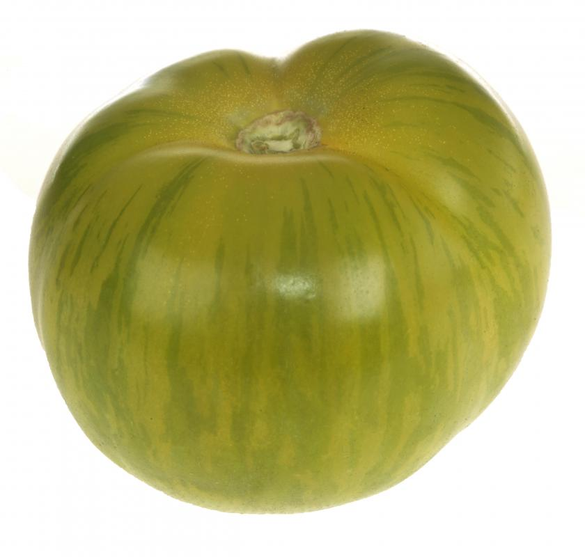 Green zebra tomatoes can be used to make an especially tart and spicy green tomato salsa.