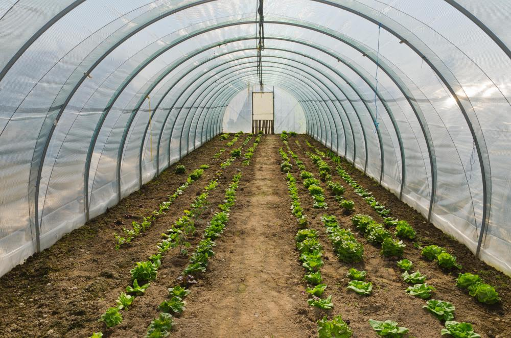 Some greenhouses utilize plastic or vinyl instead of glass.