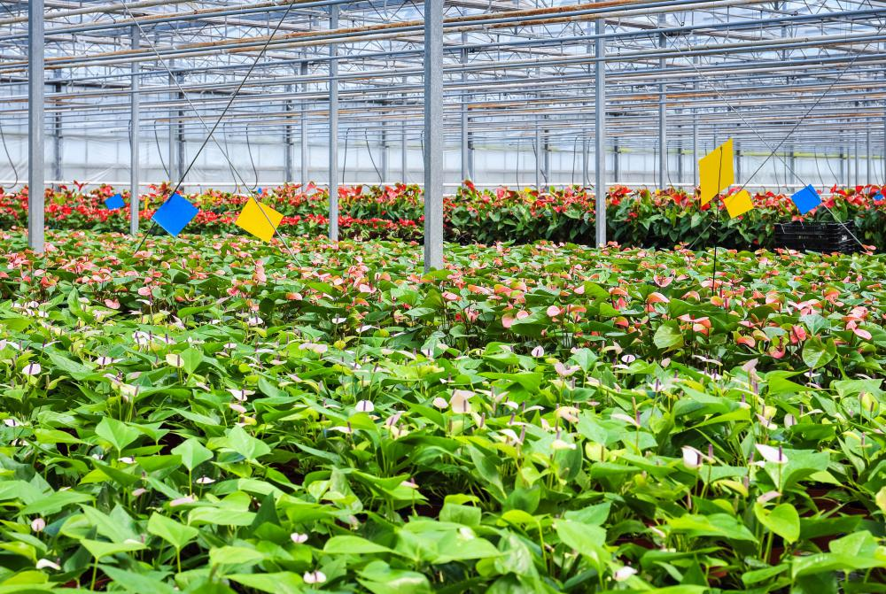 Plants Are Sometimes Grown In Controlled Greenhouse Environments