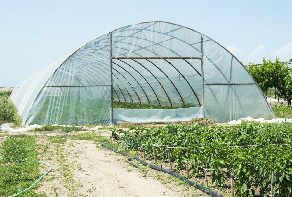 Greenhouse gardeners grow plants in a protected environment.