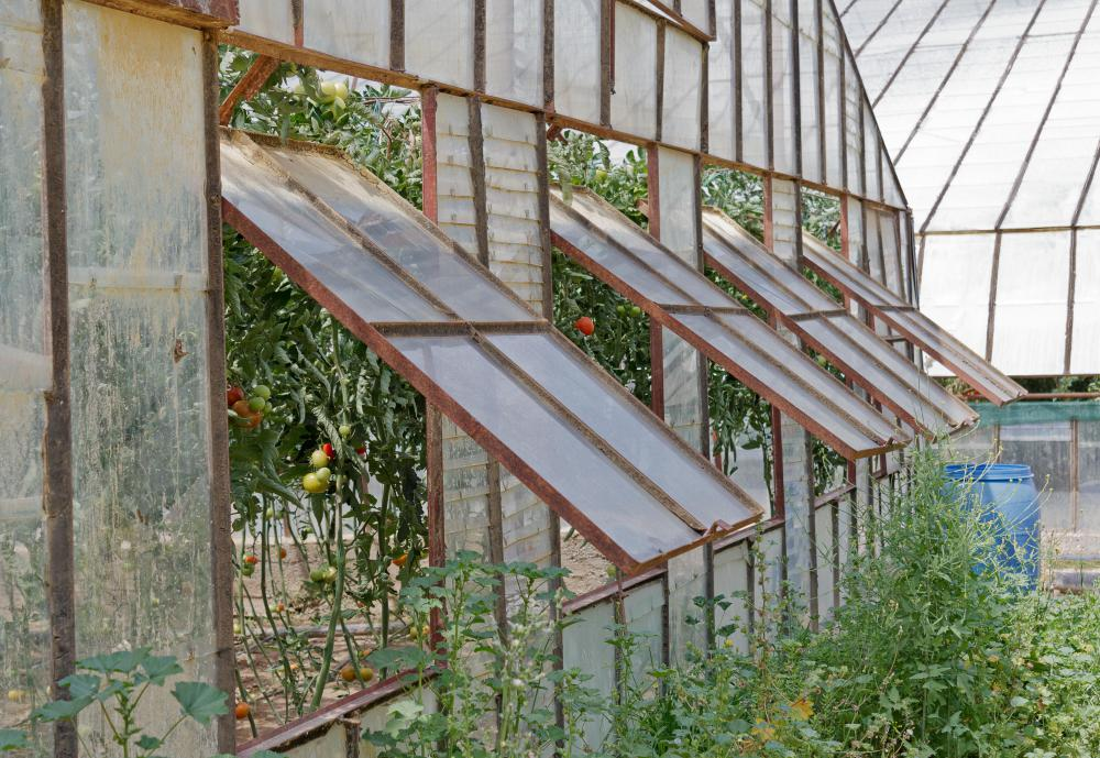 Greenhouse windows should fit tightly into the window opening to prevent cold air from harming the plants.