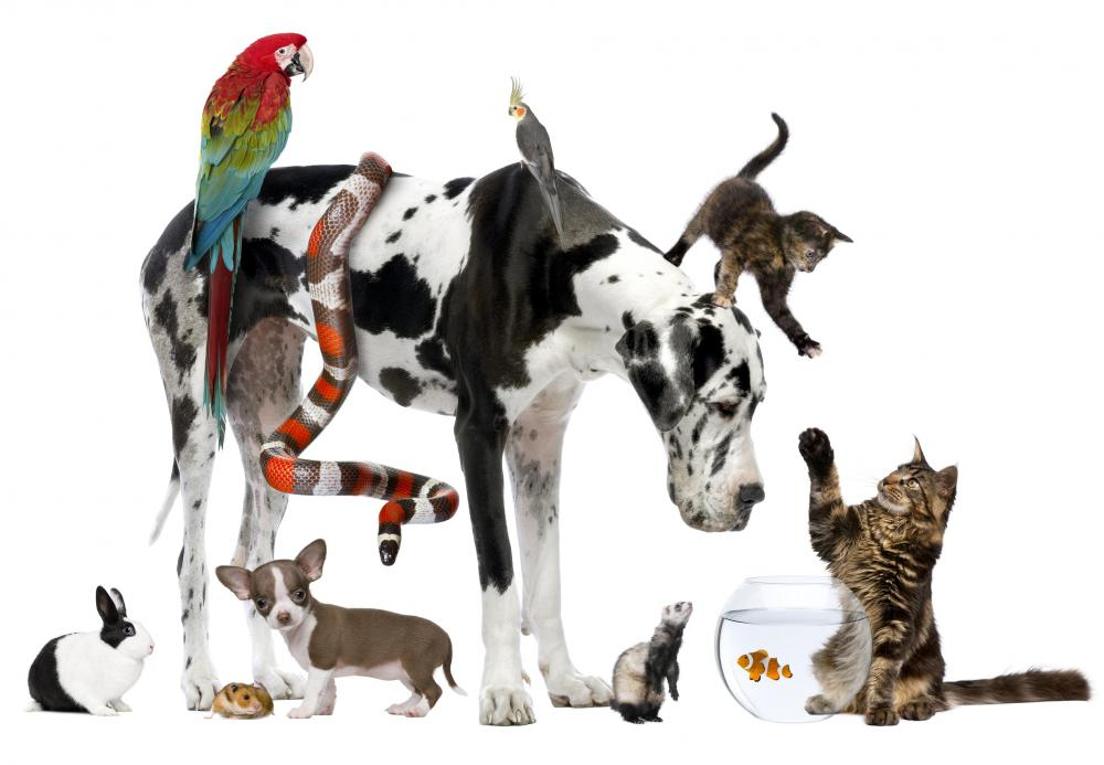 How do I Become an Animal Behaviorist? (with picture)