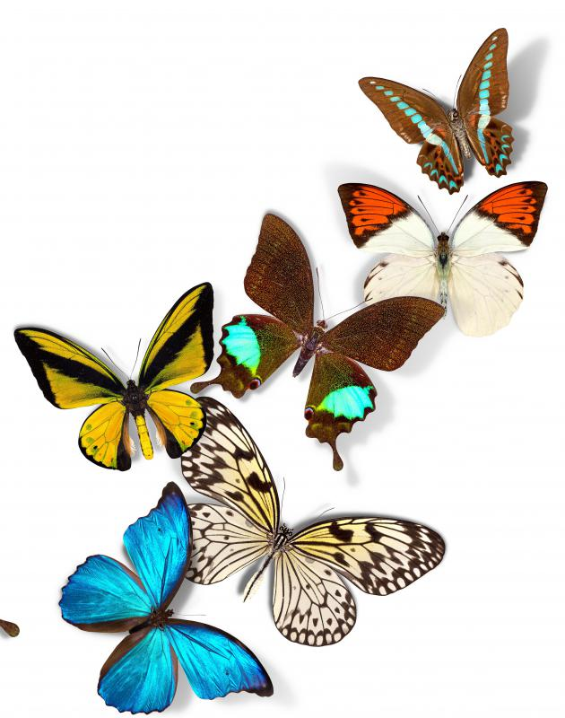Butterflies pollinate many types of plants.