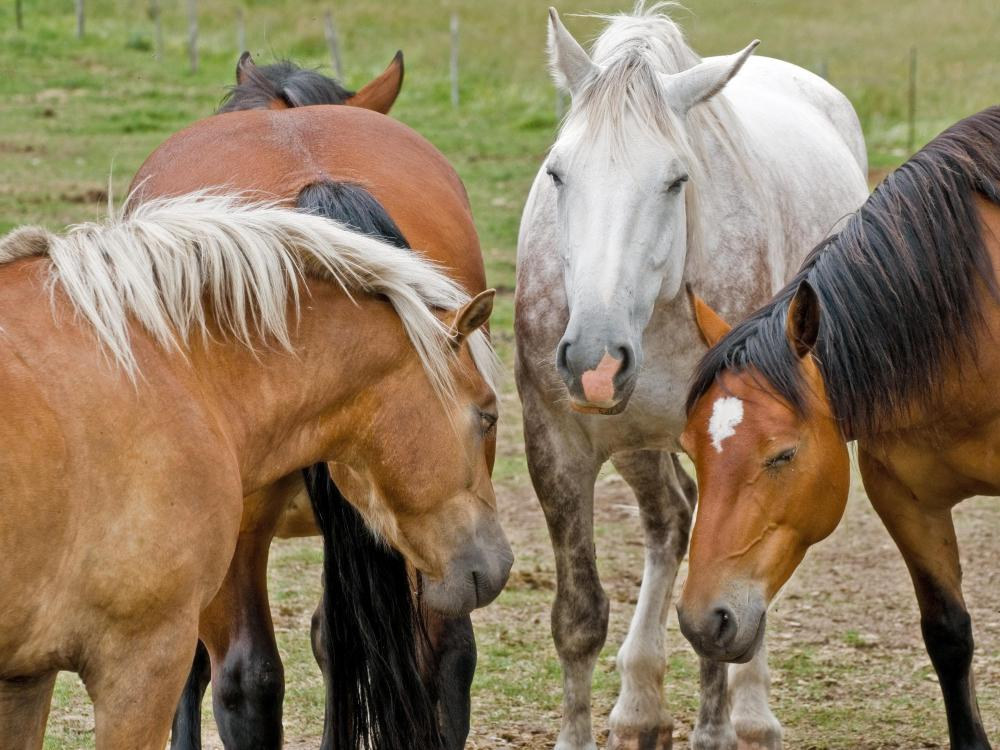 Horses are among the animals that can develop Lyme disease.